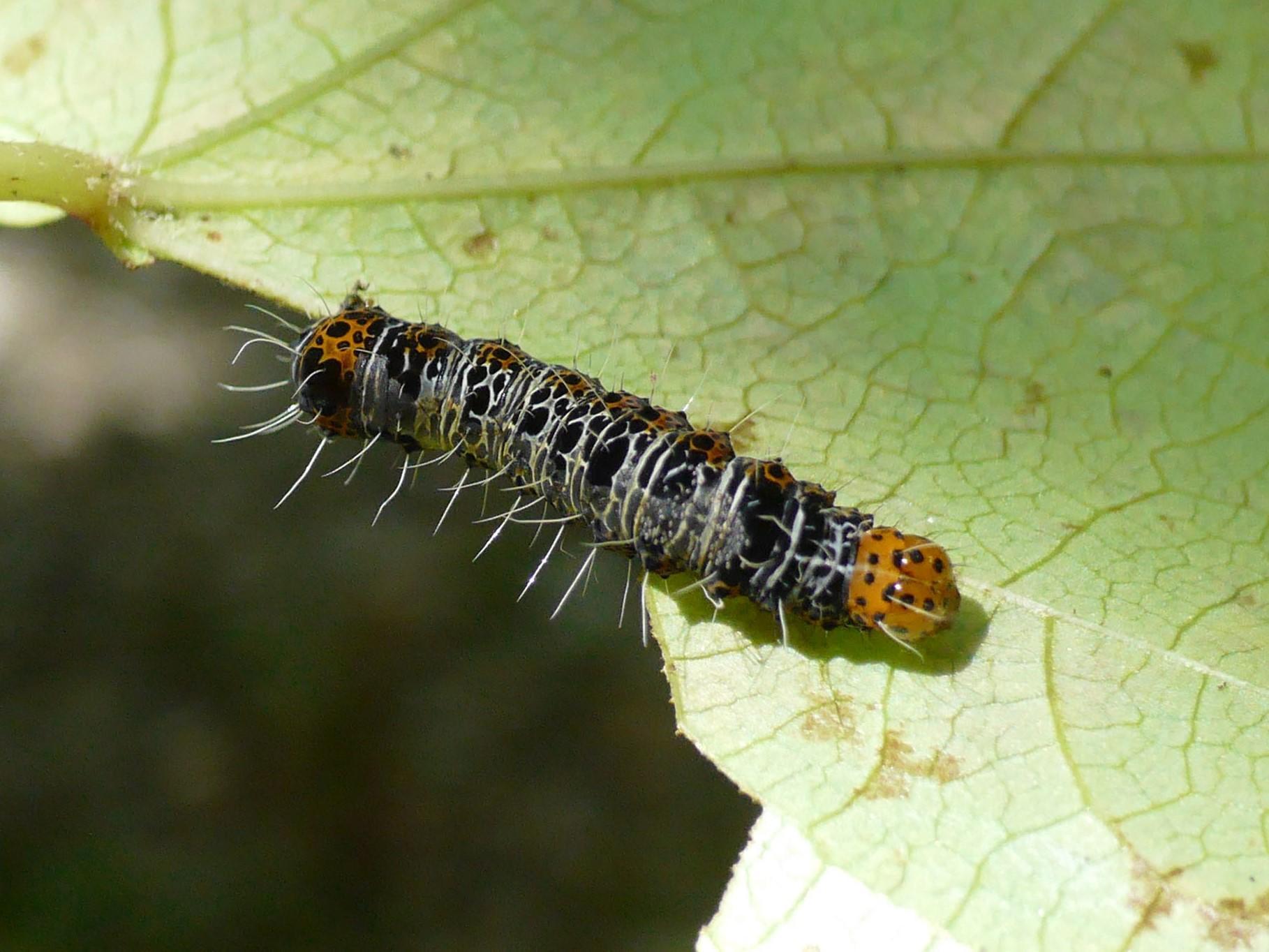 秋の生き物の画像